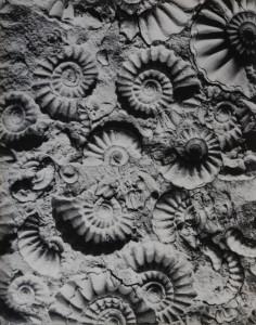 Ammonities Graveyard #2 - Drumheller, Alberta, David Baird, n.d.